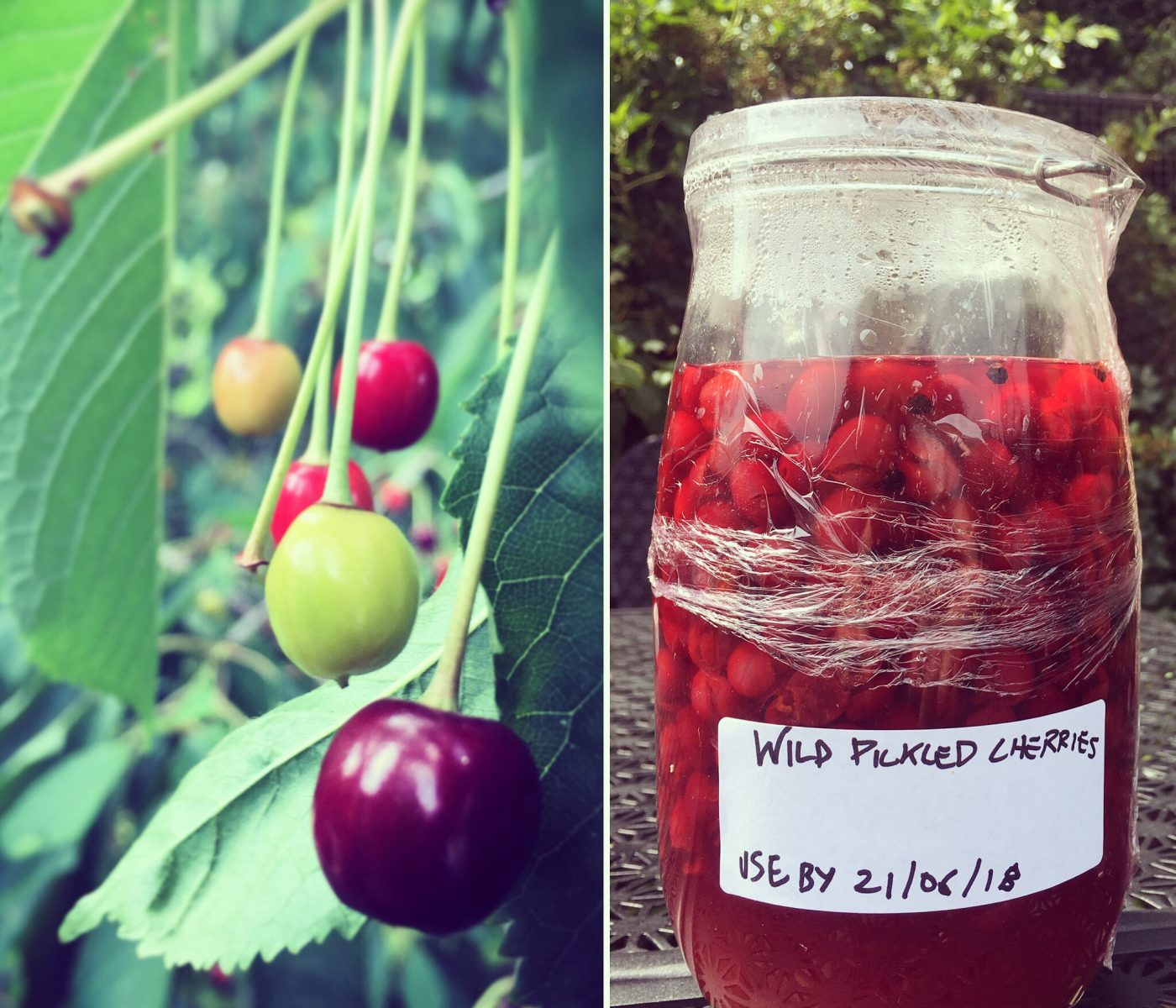 Foraged Produce - Wild Cherry Recipes